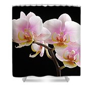 Pink Sensations Shower Curtain by Juergen Roth