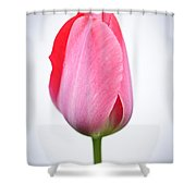 Pink tulip Shower Curtain by Elena Elisseeva