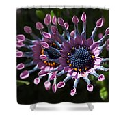 Pink Whirls Shower Curtain by Rona Black