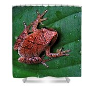 Pinkletink Shower Curtain by Mim White