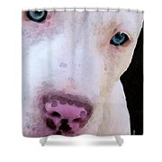 Pit Bull Art - Not A Fighter Shower Curtain by Sharon Cummings