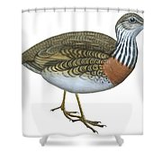 Plains Wanderer  Shower Curtain by Anonymous