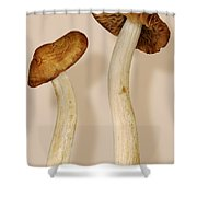 Plant - Mushrooms - I'm So Proud Of My Daughter Shower Curtain by Mike Savad