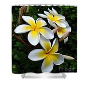 Plumeria In The Sunshine Shower Curtain by Kaye Menner