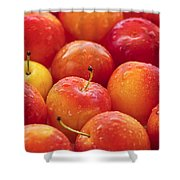 Plums  Shower Curtain by Elena Elisseeva
