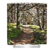 Point Lobos Cypress Path Shower Curtain by Jack Schultz