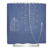 Polypodium Scottii Shower Curtain by Aged Pixel