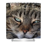 Ponder Shower Curtain by Susan Smith
