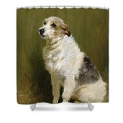Portrait of Pilu Shower Curtain by John Charlton