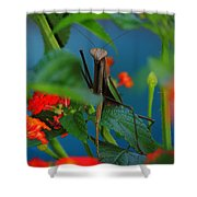 Praying Mantis Shower Curtain by Raymond Salani III