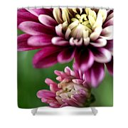 Present And Future Shower Curtain by Deb Halloran