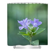 Pretty In Purple Shower Curtain by Kim Hojnacki