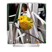 Pretty Little Yellow Warbler Shower Curtain by Elizabeth Winter