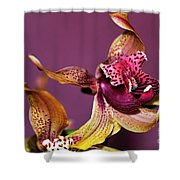 Pretty Orchid on Pink Shower Curtain by Kaye Menner