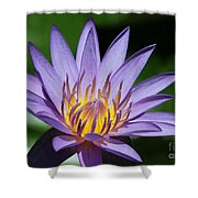 Pretty Purple Petals Shower Curtain by Sabrina L Ryan
