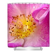 Pride Shower Curtain by Cathleen Cario-Reece
