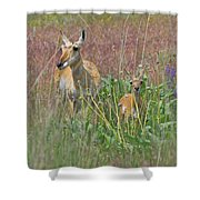 Pronghorn Doe And Fawn Shower Curtain by Karon Melillo DeVega