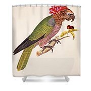 Psittacus Accipitrinus Shower Curtain by German School