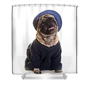 Pug In Sweater And Hat Shower Curtain by Edward Fielding