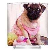 Pug Puppy Bath Time Shower Curtain by Edward Fielding
