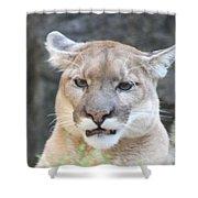 Puma Head Shot Shower Curtain by John Telfer