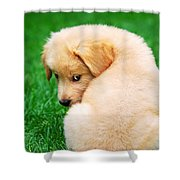 Puppy Love Shower Curtain by Christina Rollo