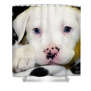 Puppy Pose With 4 Spots On Nose Shower Curtain by Peggy  Franz