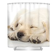 Puppy Sleeping On Paws Shower Curtain by Johan Swanepoel