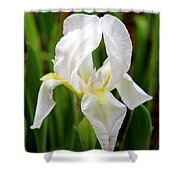 Purely White Iris Shower Curtain by Kathy  White