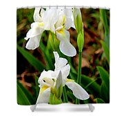 Purity In Pairs Shower Curtain by Kathy  White