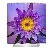 Purple Shower Curtain by Heiko Koehrer-Wagner