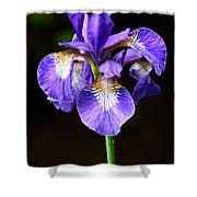 Purple Iris Shower Curtain by Adam Romanowicz