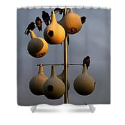 Purple Martin Twilight Shower Curtain by Karen Wiles