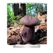 Purple Mushroom Shower Curtain by Joshua Bales