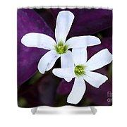 Purple Queen Flowers Shower Curtain by Sabrina L Ryan