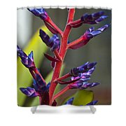Purple Spike Bromeliad Shower Curtain by Sharon Cummings