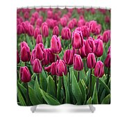 Purple Tulips Shower Curtain by Inge Johnsson