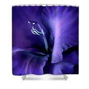 Purple Velvet Gladiolus Flower Shower Curtain by Jennie Marie Schell