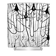 Pyramidal Cells Illustrated By Cajal Shower Curtain by Science Source