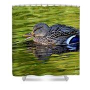 Quack Shower Curtain by Sharon Talson