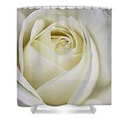 Queen Ivory Rose Flower 2 Shower Curtain by Jennie Marie Schell