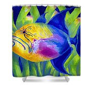 Queen Triggerfish Shower Curtain by Stephen Anderson