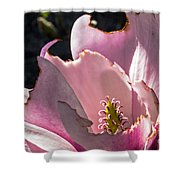 Ragged Magnolia Shower Curtain by Kate Brown