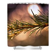 Rain Droplets On Pine Needles Shower Curtain by Loriental Photography