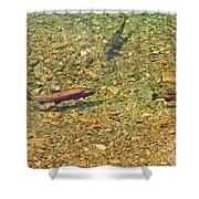 Rainbow Trout Shower Curtain by Tonya Hance