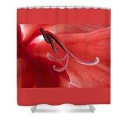 Red Dream - Gladiolus Shower Curtain by Ben and Raisa Gertsberg