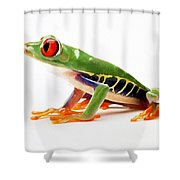 Red-eye Tree Frog 4 Shower Curtain by Lanjee Chee