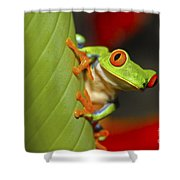 Red Eyed Leaf Frog Shower Curtain by Bob Hislop
