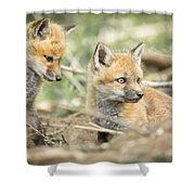 Red Fox Kits Shower Curtain by Everet Regal