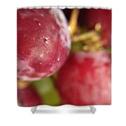 Red Grapes Shower Curtain by Marian Palucci